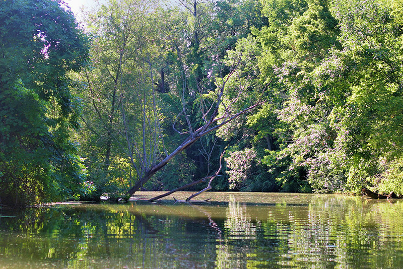 Fallen trees jut out of the water like bones of creatures long since passed
