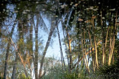 George Brown Darwin Botanic Gardens, NT, Australia. August 2010