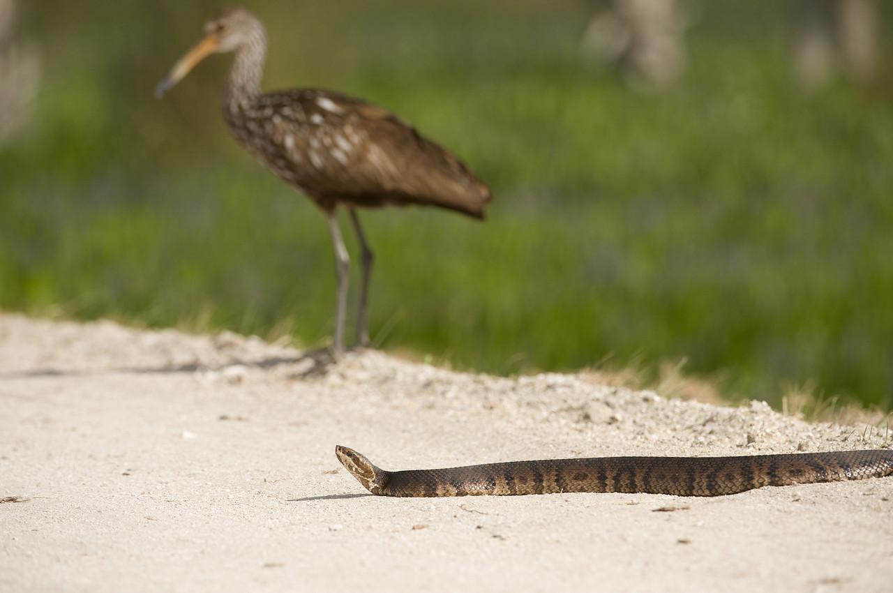 Sandhill Crane,snake,American Bitters,Baby Cara Cara-ccloseup, et al