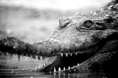 Reptiles and Amphibians (B&W)