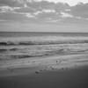 Loggerhead hatchlings (Caretta caretta)<br /> Caswell Beach, North Carolina, USA<br /> IUCN Status: Endangered