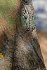 Lizard3373