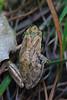 Frog2794
