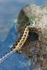 Snake8609