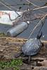 Turtletrash4158