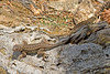 Lizards0483(8x12)