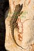 Lizard_9571