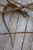 Lizard3473