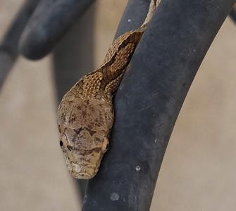 Tiny Florida snake