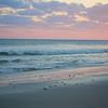Loggerhead (Caretta caretta)<br /> Caswell Beach, North Carolina, USA<br /> IUCN Status: Endangered