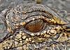 Alligator, Reflection of Photographer in Eye,<br /> Aransas National Wildlife Refuge, Texas
