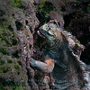 Marine Iguana feeding-Bartolome Island-Galapagos 1