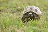 Tortoise_LAJ6998