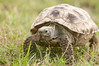 Tortoise_LAJ6987