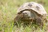 Tortoise_LAJ6985