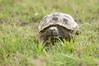 Tortoise_LAJ6999