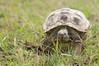 Tortoise_LAJ6993