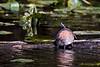 Turtles-6