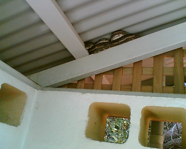 Python in the ceiling.