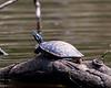 Turtles-14
