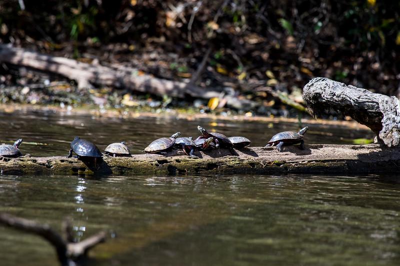 Turtles-22