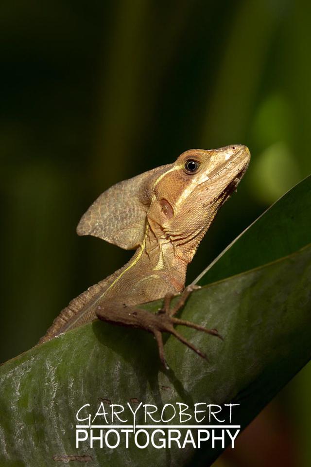 Costa Rica-0037