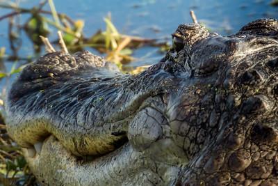 Florida Gator Study  23