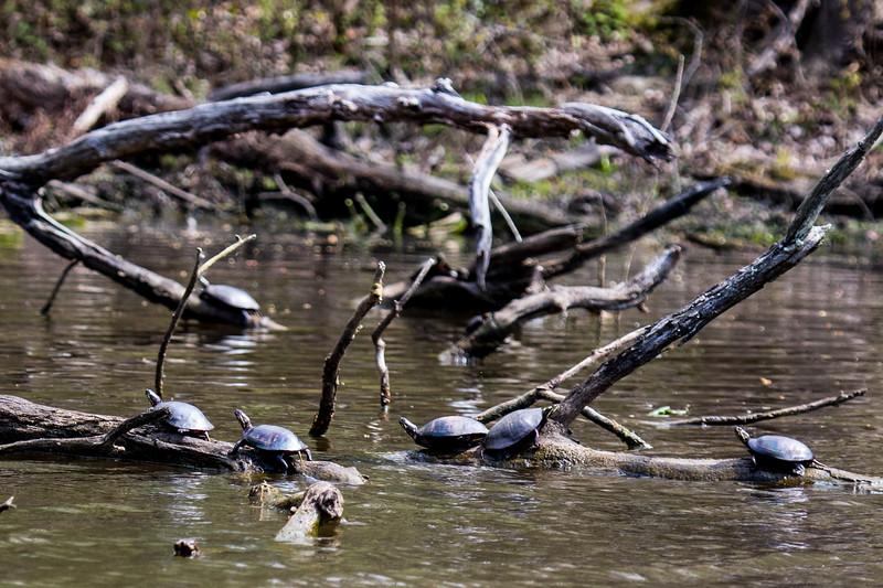Turtles-10