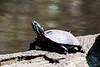 Turtles-30