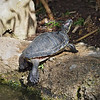 Turtle at Santa Ana Zoo - 10 Jan 2010