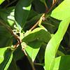 "<a href=""http://xenogere.com/representin-the-reptilian-residents/"" title=""Representin' the reptilian residents"">Blog entry</a>"