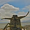 Giant Waterbeetle