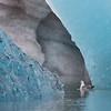 Stormfågel i grotta med blåis