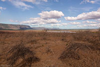 Zimanga landscape, Bushveld
