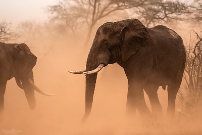 Elefant i dammoln