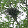 This is one of two eagles' nests in their back yard.