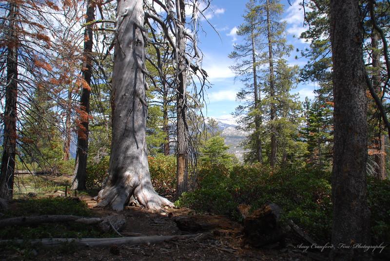 Forest Fauna