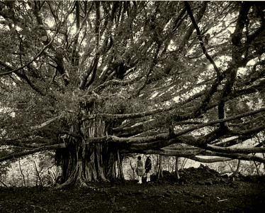 The Mysticism of Trees