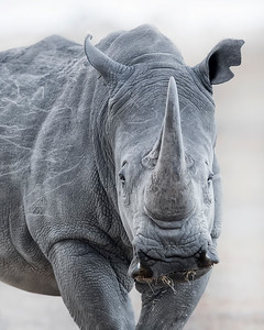 Ol Pejata Conservancy Park Sweetwaters White Rhino