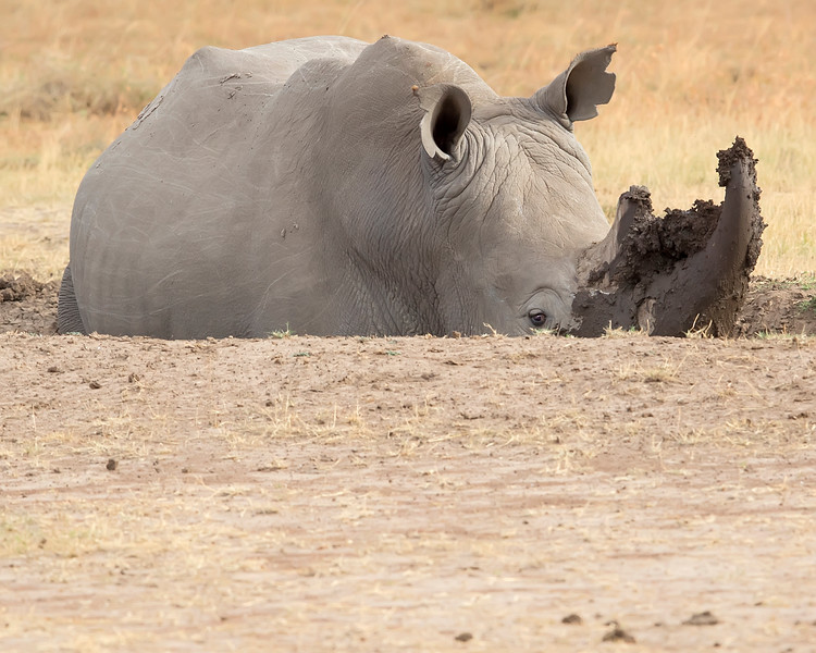 Sweetwaters/Ol Pejeta Conservancy  Park White Rhino