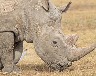 Sweetwaters/Ol Pejeta Conservancy  Park White Rhino