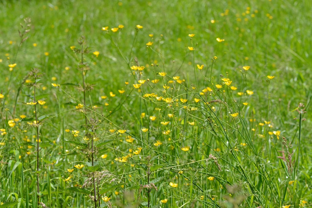 Grass and Wildflowers