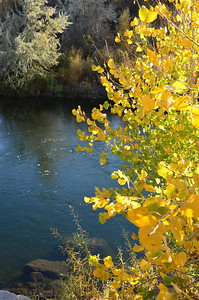 Along the Truckee River in Sparks Nevada - October 30, 2013