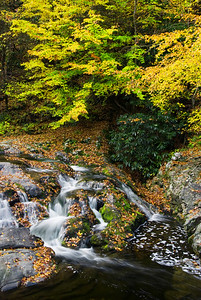 This is an often photographed cascade along Little River Road near Tremont, Great Smoky Mountains.