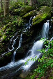 This is a small cascade found along the road at in the Tremont area of the Great Smoky Mountains National Park.