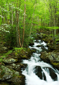 Middle Prong of the Little River as viewed from the bridge at the end of the road past the Institute at Tremont, Great Smoky Mountains.