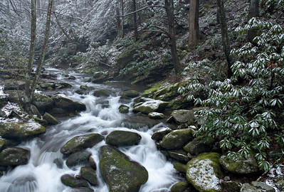A surprise spring snow dusted the leaves along the Roaring Fork Motor Nature Trail, Great Smoky Mountains.