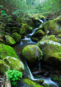 This is a small cascade along Baxter Creek Trail, Great Smoky Mountains.