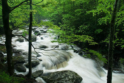 The famous scene at Tremont, Great Smoky Mountains.