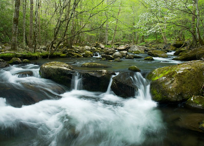 You can find many pleasant scenes along the road to Tremont, Great Smoky Mountains.